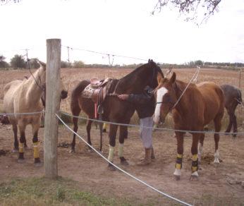 Kävin hevospoolo tilalla Mercedeksessä
